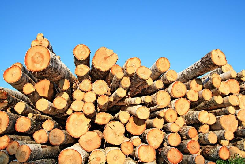 Download Sawn up tree stock image. Image of hewn, sawed, firewood - 11703311