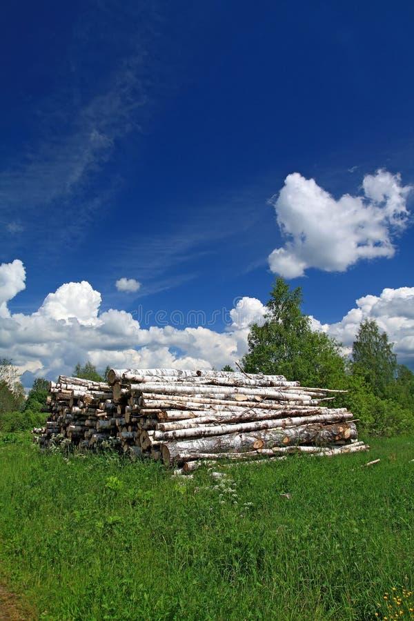 Download Sawn up tree stock photo. Image of resource, pine, sawn - 25564334