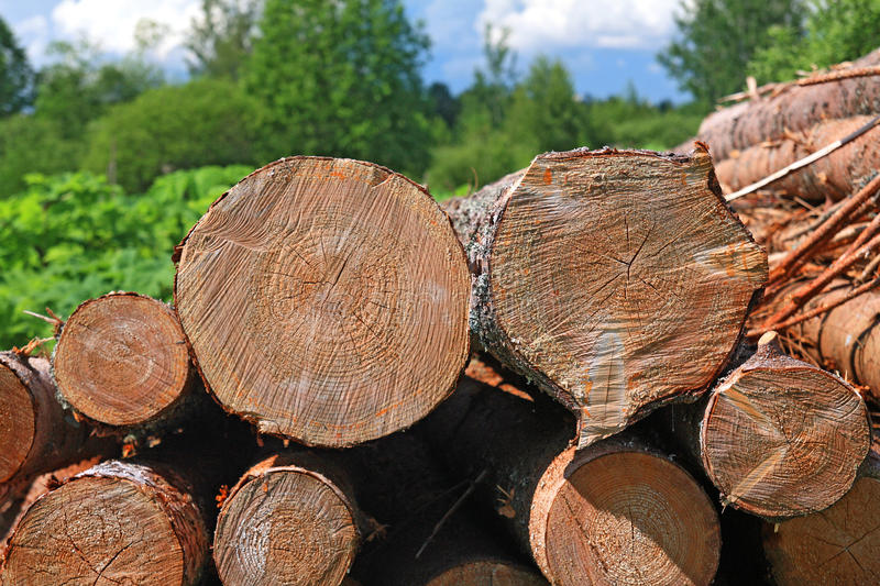 Download Sawn up tree stock photo. Image of nature, down, outdoor - 25564394