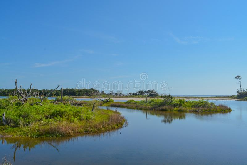 Sawpit-Nebenfluss bei großem Talbot State Park, Jacksonville, Duval County, Florida USA lizenzfreies stockfoto