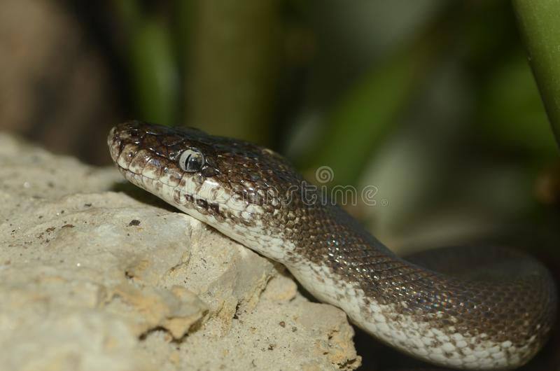 Sawu python2