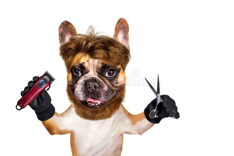 Sax och clipper f?r h?ll f?r fransk bulldogg f?r rolig hundbarberaregroomer ljust r?dbrun bakgrund isolerad manwhite fotografering för bildbyråer