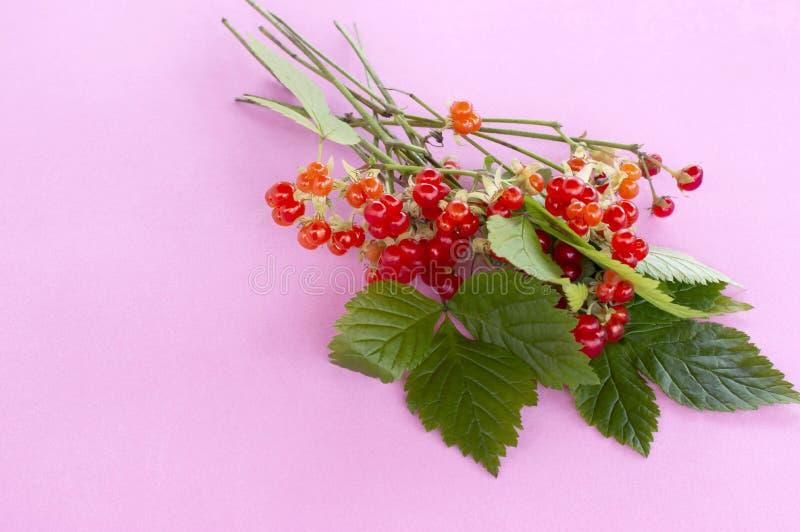 Saxatilis del Rubus della mora di pietra della pianta medicinale immagini stock