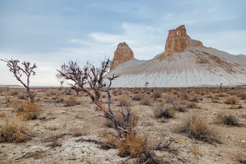 Saxaul sec dans le désert sur le fond des roches faites une pointe image libre de droits