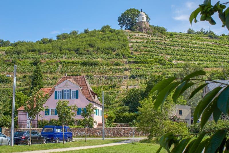 Saxisk vingård som förbiser Jacobsteinen royaltyfria bilder