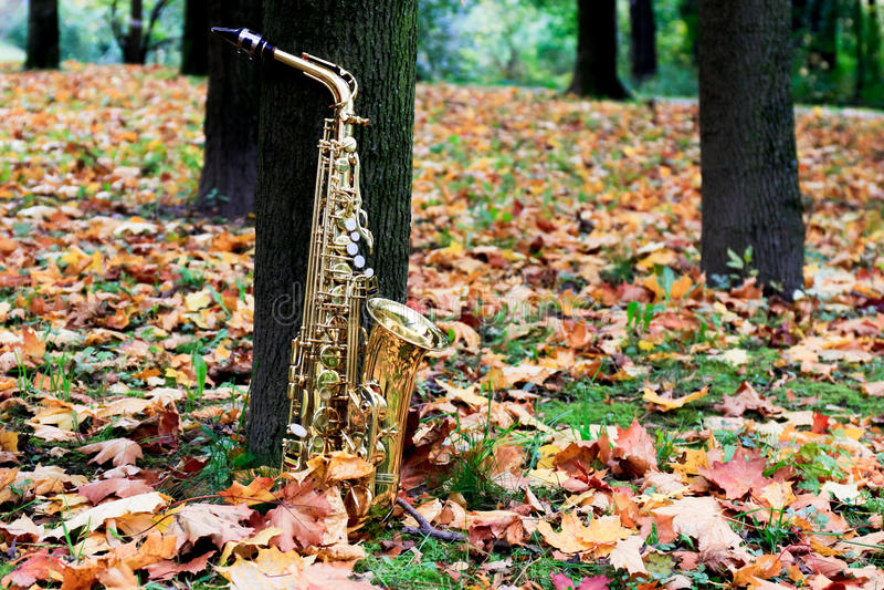 Saxophone Alto στο πάρκο φθινοπώρου στοκ εικόνες