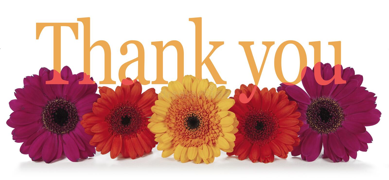 5,007 Thank You Flowers Photos - Free & Royalty-Free Stock Photos from  Dreamstime