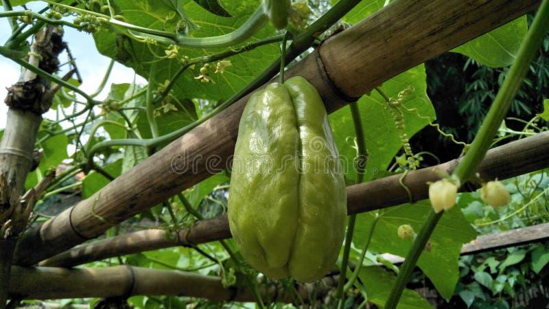 Sayuran de Buah images libres de droits