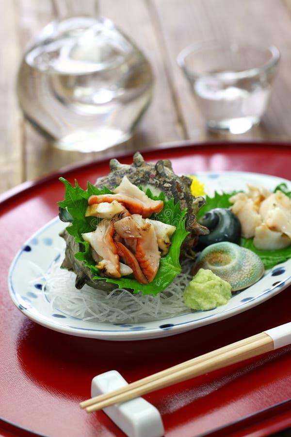 Sazae uzbrajać w rogi turban skorupy sashimi obraz royalty free