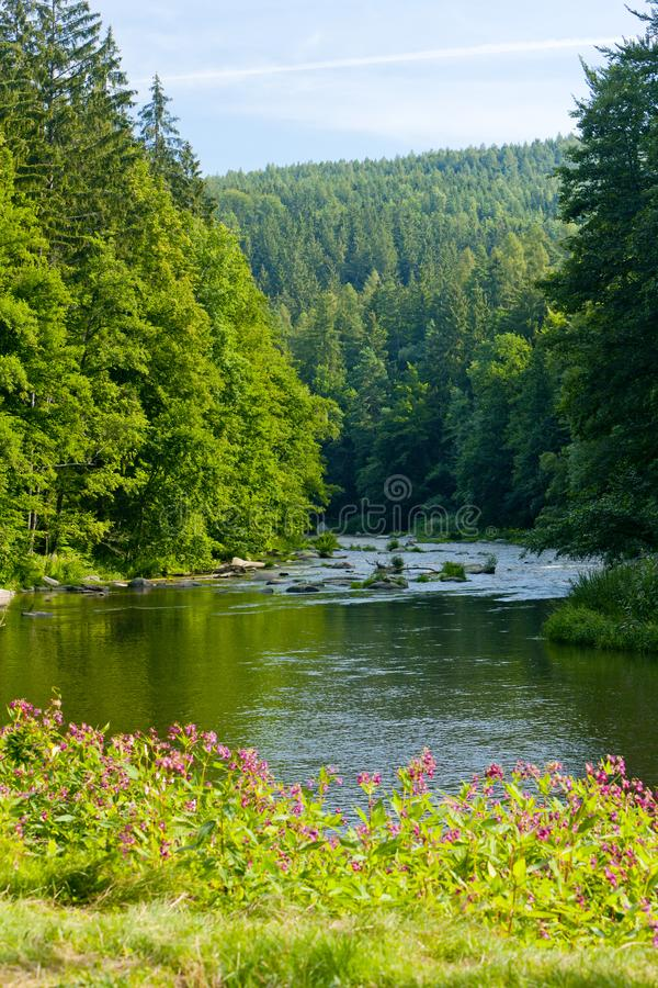 Sazavarivier, Tsjechische Republiek royalty-vrije stock foto