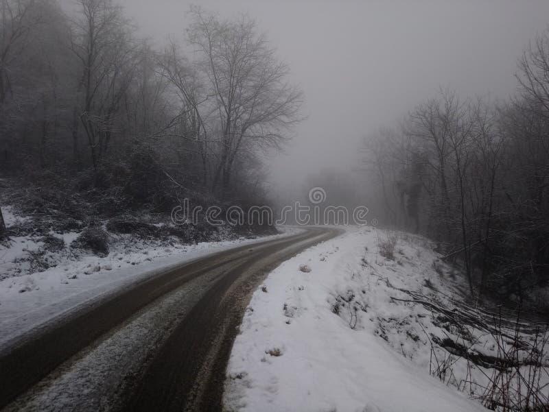 Sb da árvore da névoa da estrada, montanha do iw imagem de stock royalty free
