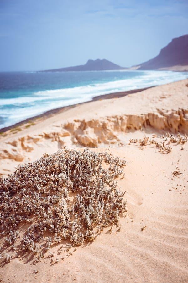 Sbalorditivo desoli il paesaggio delle dune di sabbia e delle piante del deserto davanti alle onde di oceano su Baia il Das Gatas immagini stock