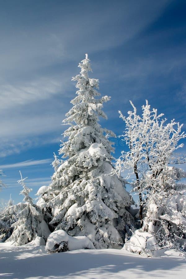 Sbarco ed alberi di inverno fotografia stock libera da diritti