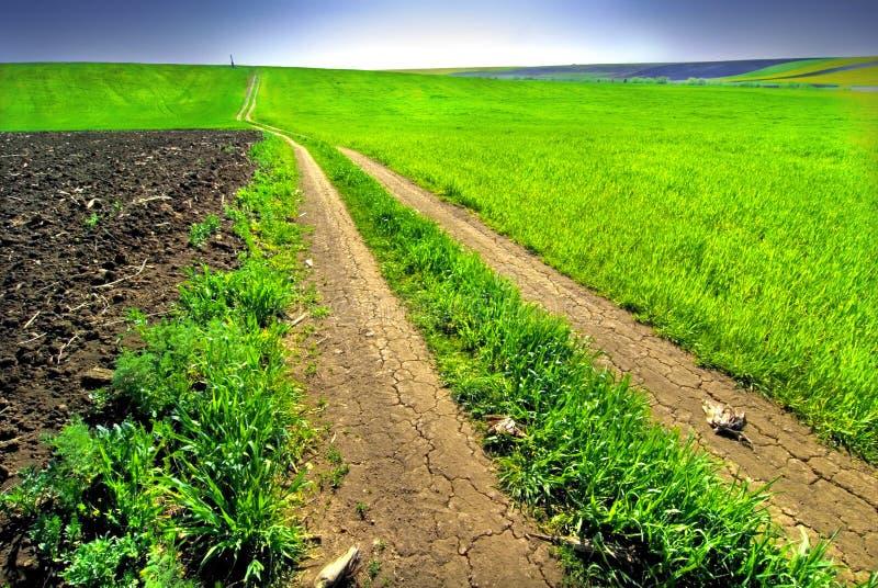 Sbarco fertile del campo verde fotografia stock libera da diritti