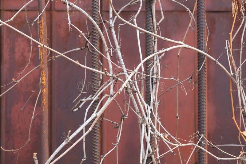 Sbarre di ferro avvolte con erba asciutta immagini stock