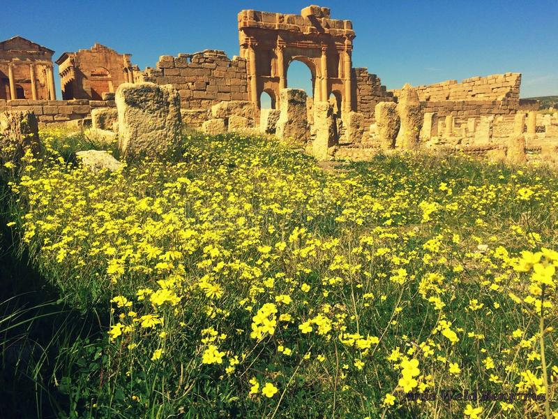sbeitla, άνοιξη, ρωμαϊκές καταστροφές στοκ εικόνες με δικαίωμα ελεύθερης χρήσης