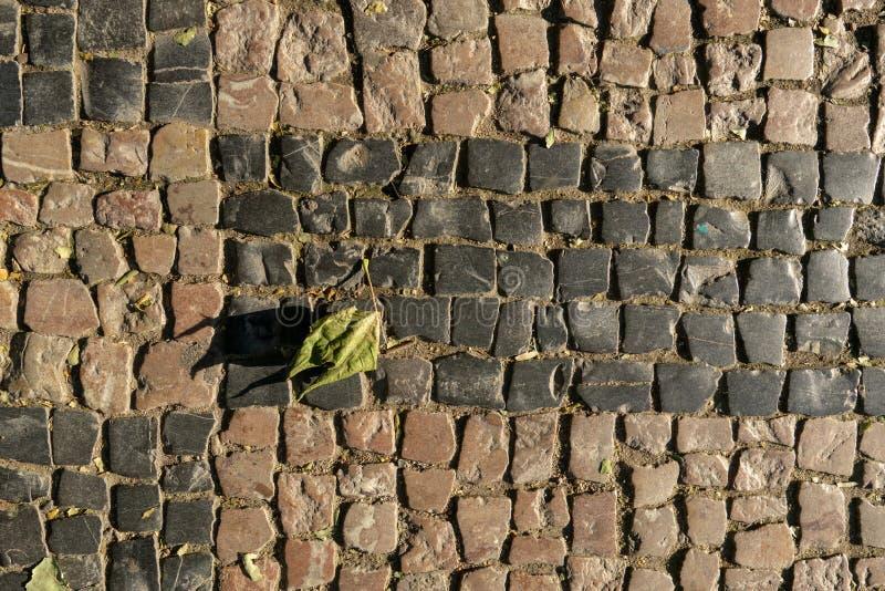 Sbiadire foglia verde che si trova sulla pavimentazione sotto il sole di mattina immagini stock