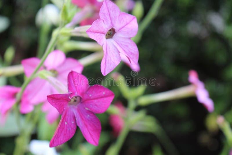 Sbocciare dei fiori immagini stock