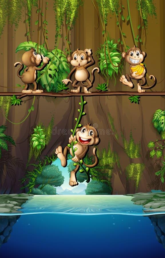 Scène avec les singes et la rivière illustration libre de droits