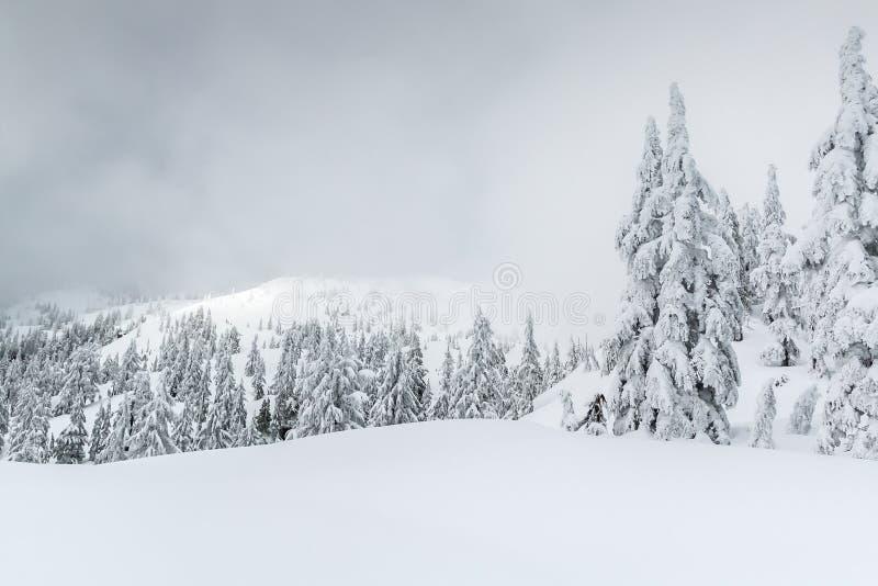 Scène brumeuse d'hiver dans le backcountry photos stock