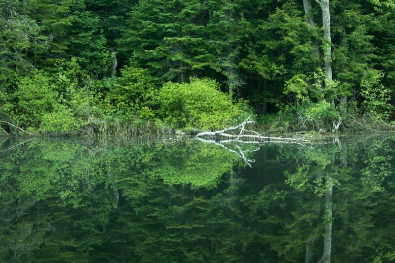 Scène calme de début de la matinée sur la rivière photographie stock