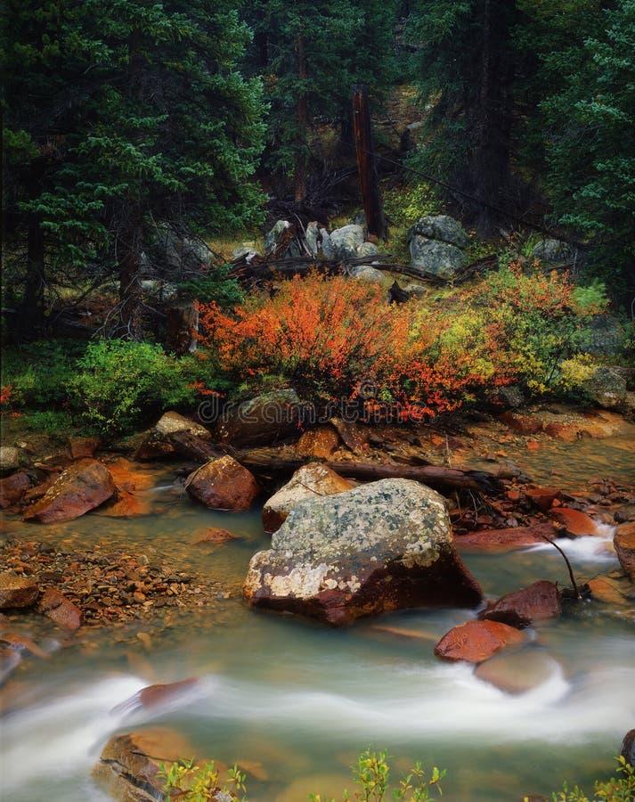 Scène classique de montagne d'été après pluie, le Colorado photographie stock libre de droits