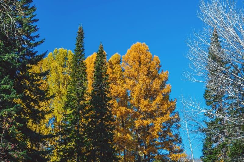 Scène colorée d'automne qui inclut des arbres de trois couleurs différentes photographie stock