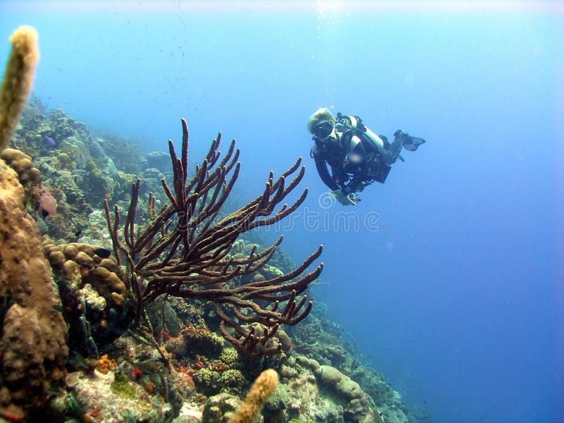 Scène colorée de récif coralien photo libre de droits