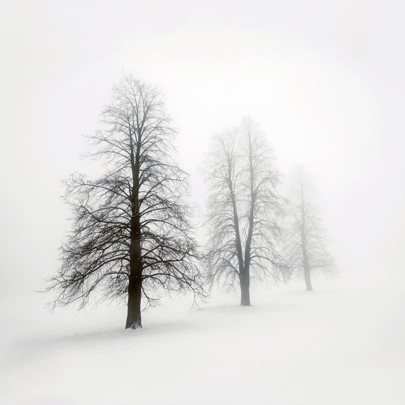 Arbres d'hiver en brouillard photos stock