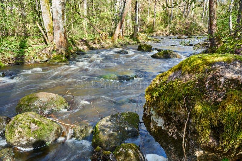 Scène déprimée paisible de rivière le temps de forêt au printemps images stock