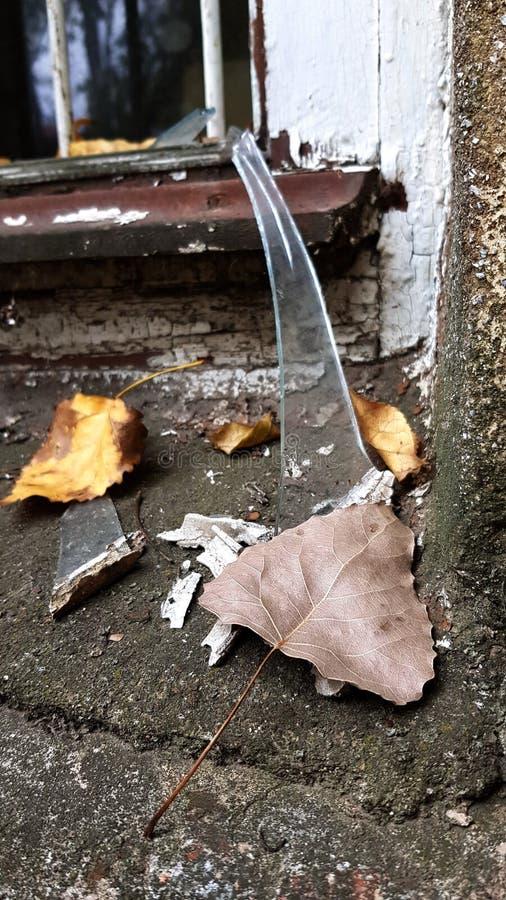 Scène d'automne avec le foyer sélectif pour brunir la feuille sèche photographie stock libre de droits