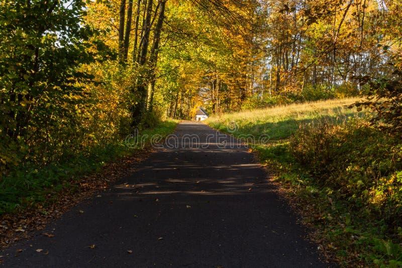 Scène d'automne Fond de chute Feuilles colorées en parc partout Arbres et chemin couverts par le feuillage jaune photos libres de droits