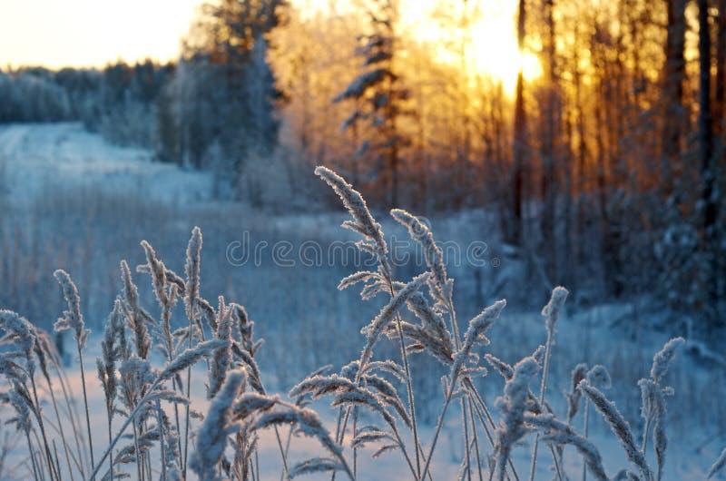 Scène d'hiver photos libres de droits