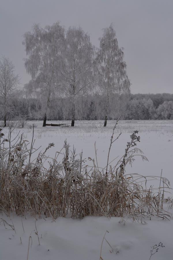 Scène d'hiver avec les herbes sèches givrées sur les arbres de premier plan et de bouleau en gelée sur le fond image stock
