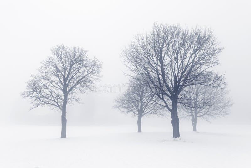 Arbres d'hiver en brouillard photo libre de droits