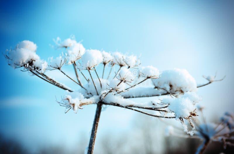 Scène d'hiver. Fleur de Frozenned photographie stock