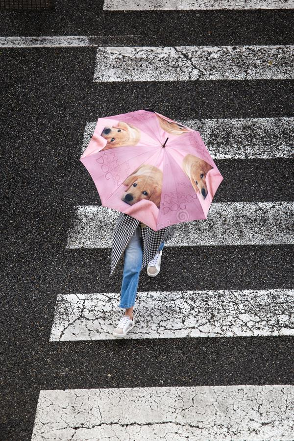 Scène d'une femme avec le parapluie mignon avec des chiens croisant le trottoir Vue sup?rieure photographie stock libre de droits