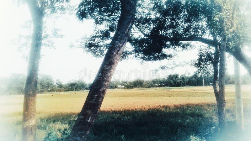 Scène de bangla photographie stock