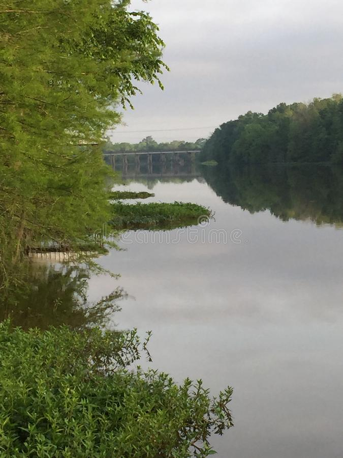 Scène de bayou photo libre de droits