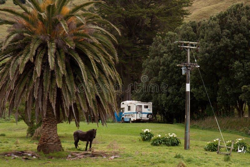 Scène de Côte Est, du Nouvelle-Zélande avec la paume, cheval et vieux campervan photographie stock libre de droits