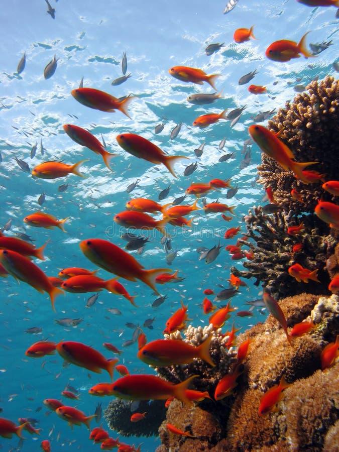 Scène de corail