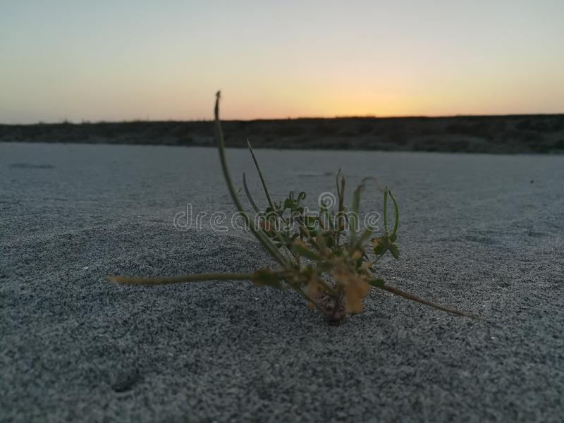 Scène de coucher du soleil photos stock