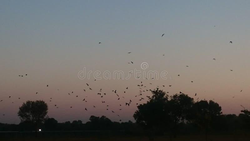 Scène de coucher du soleil avec des oiseaux retournant à leurs nids photographie stock
