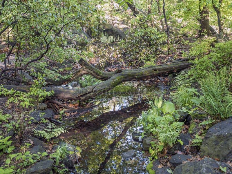 Scène de forêt au printemps images libres de droits