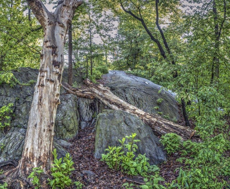 Scène de forêt au printemps photos libres de droits