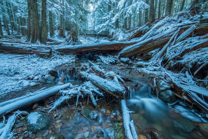 Scène de forêt de l'hiver photo libre de droits