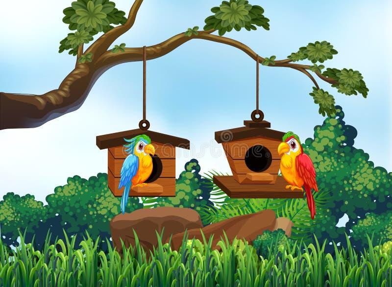 Scène de jardin avec deux perroquets illustration de vecteur