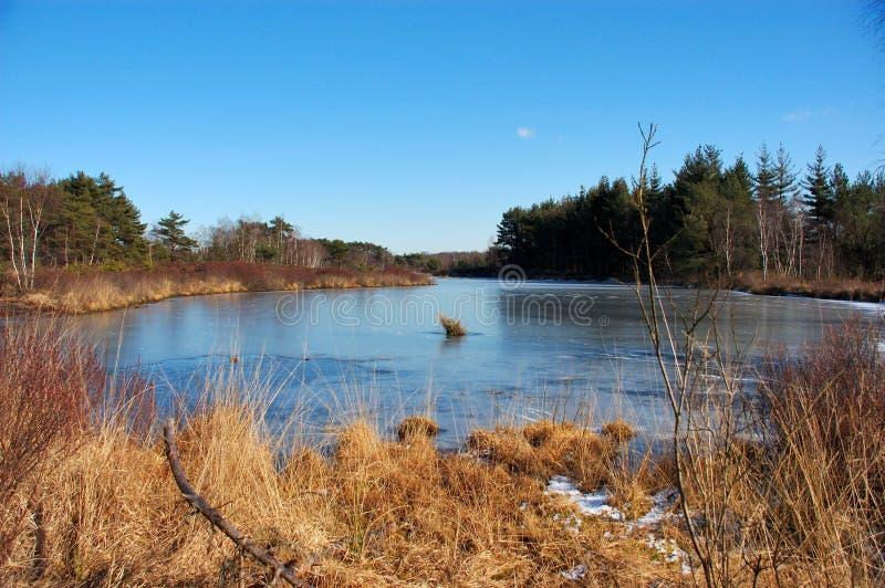 Scène de l'hiver. photos libres de droits
