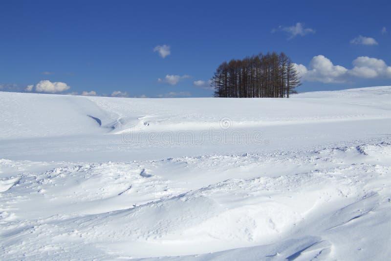 Scène de neige au Japon photo libre de droits