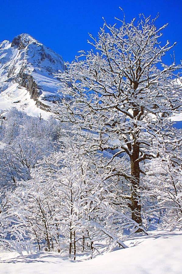 Scène de neige d'hiver dans les Alpes français photographie stock